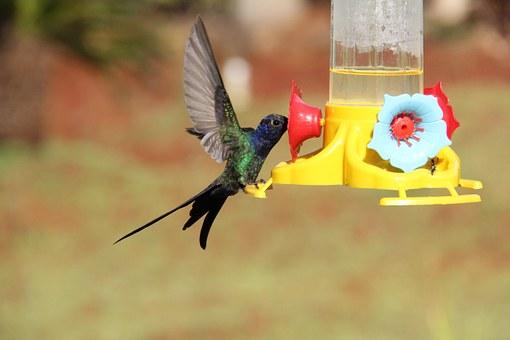 hummingbird-847904__340