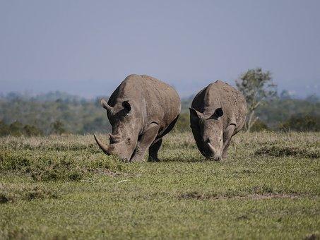 rhino-2675889__340